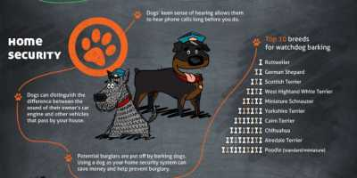 "Life cycle of a dog: an in-depth approach of the ""dog science"""