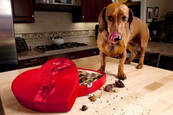 What foods are bad for dogs: understanding the importance of feeding dogs properly